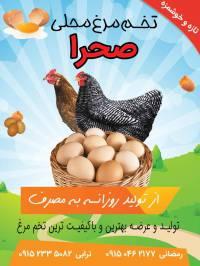 تراکت فروش تخم مرغ محلی